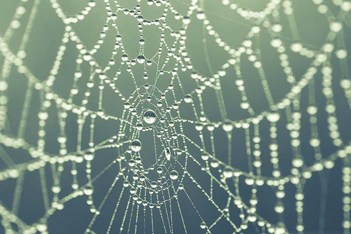 spider silk clothing