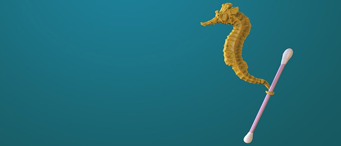 Seahorse with cotton bud